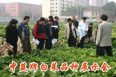 中蔬牌白菜品种展示会