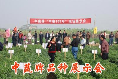 中蔬牌品种广州展示会