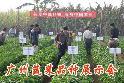 广州蔬菜品种展示会