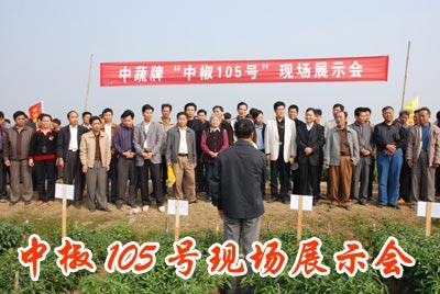 中椒105号品种展示会