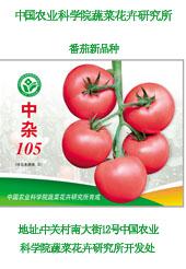 番茄种子--中杂105